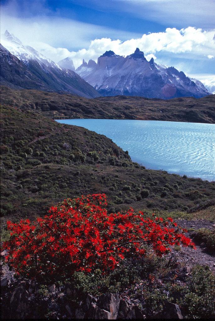 Tierra del Fuego, Lago Grey, Chile (by transalper)