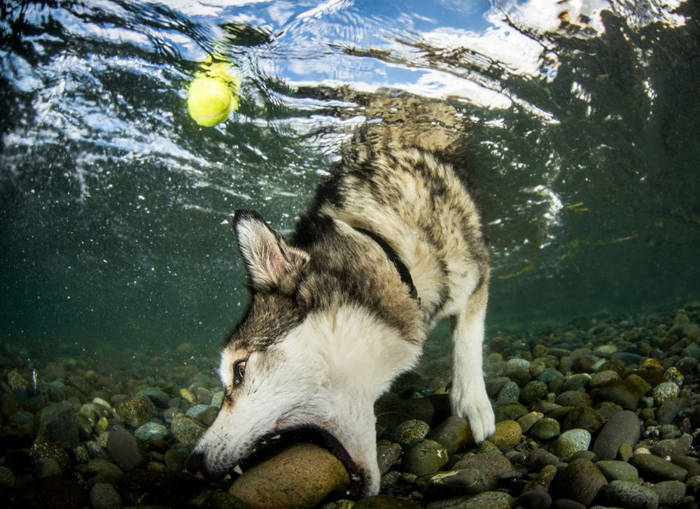 Rock or Ball? Photograph by Eiko Jones,