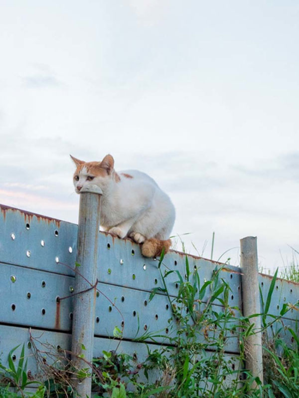 9. This cat who appears to be swallowing a pole...