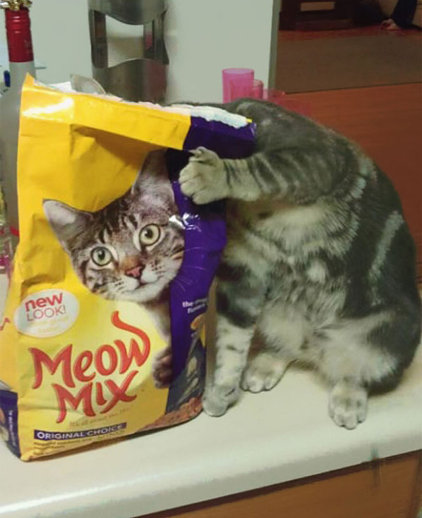 17. This bag of cat food that's suddenly come alive!