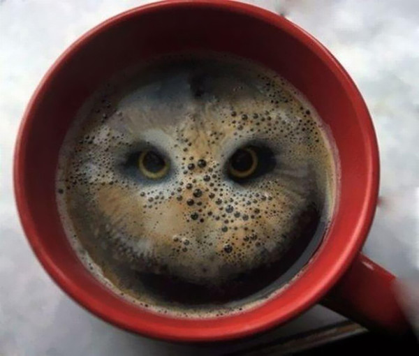10. This hot mug of...owl?