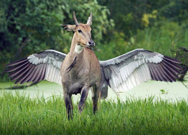 12. This amazing winged animal...