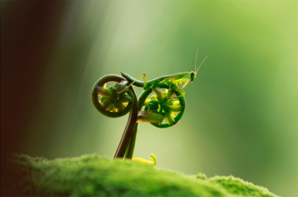 20. This praying mantis riding a bicycle made of ferns...