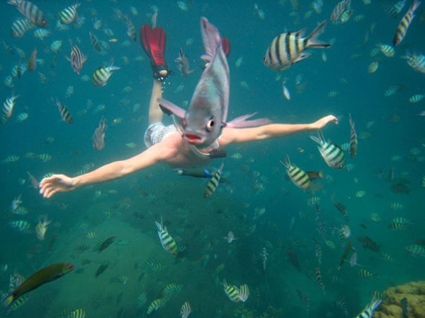 19. This peculiar mer-fish.