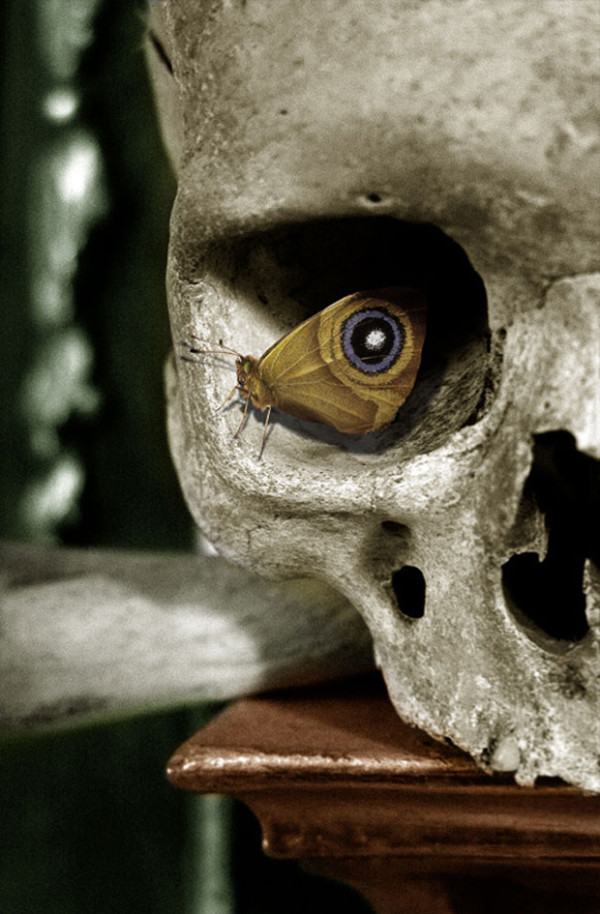 14. This skull with a rather fascinating eye...