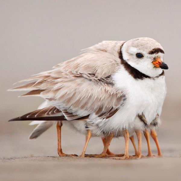 22. This many-legged bird.