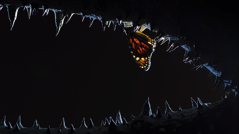 A delicate butterfly lands on some sharp teeth. (Juan Jesus Gonzalez Ahumada)