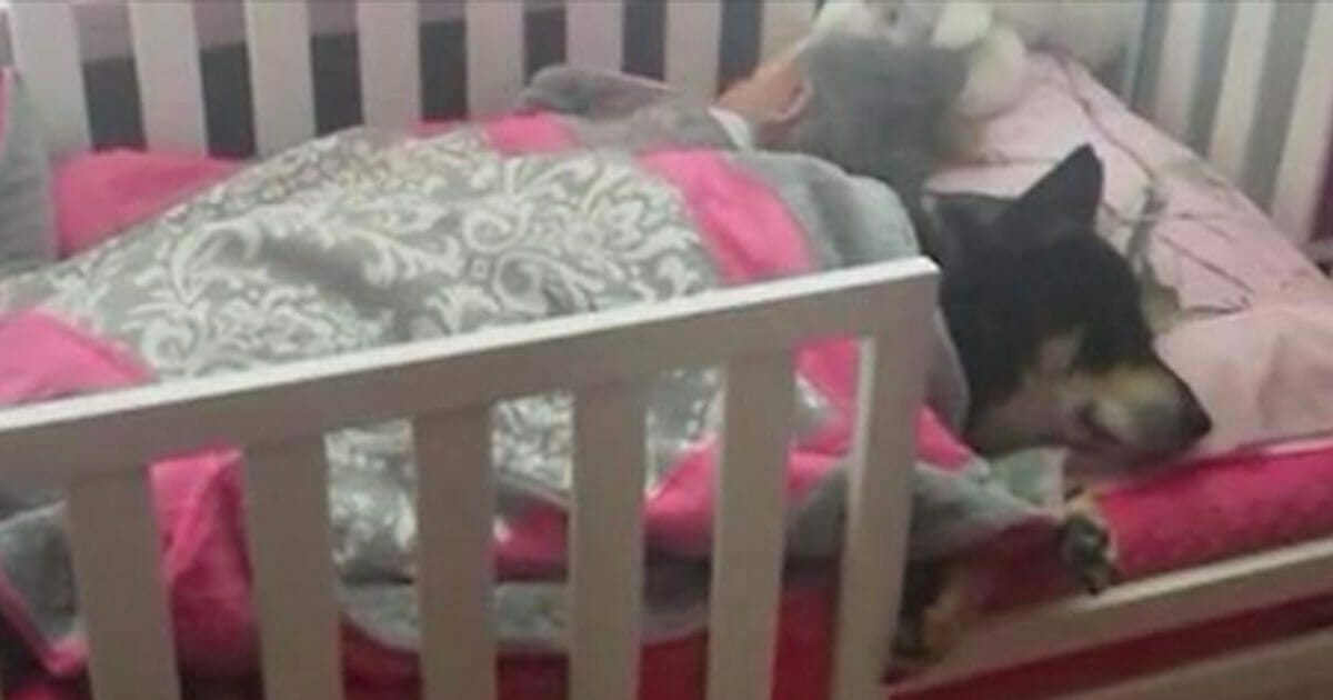 Mom thinks dog is lost, only to find him napping with her toddler